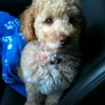 Michelle's puppy