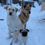 Dallace's snow babies
