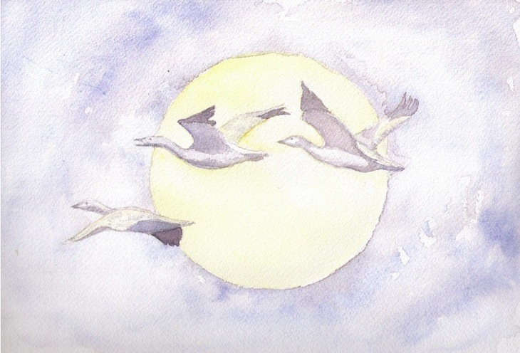 small file Arctic geese
